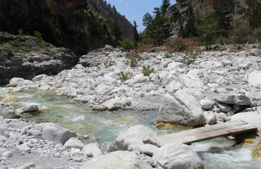 Samaria-river-and-blooms