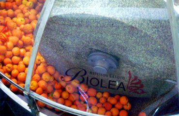 Biolea-Oranges
