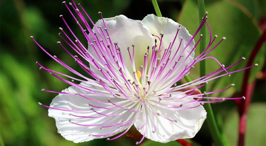 Botanical-Park-White-Flower