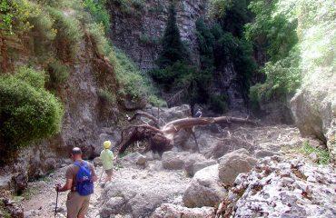 Imbros-Fallen-Tree