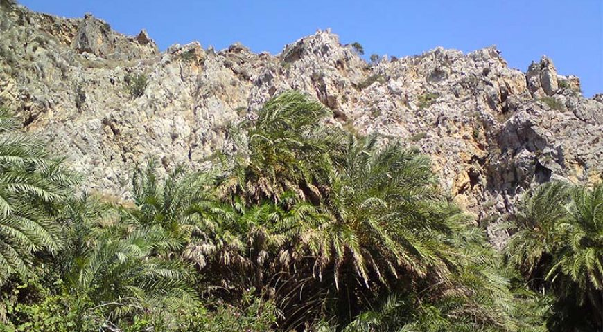 Preveli-palms