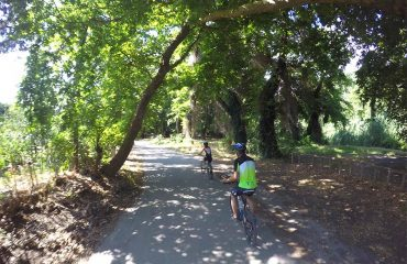 Cycling-Through-Trees