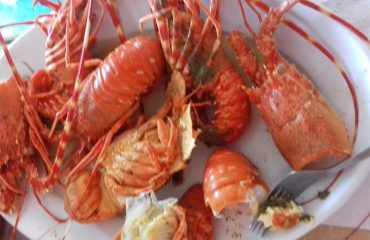 Lobster-Meal